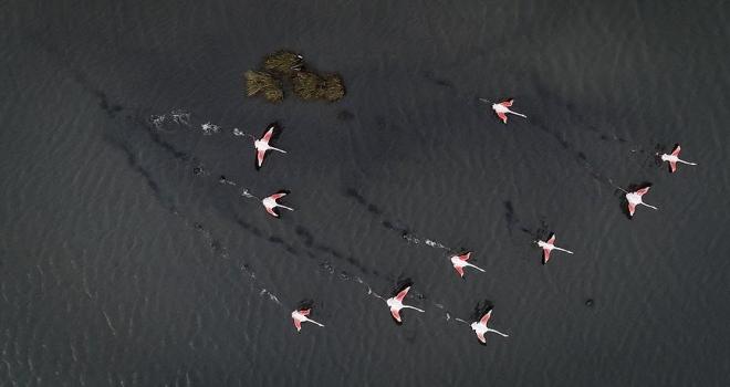 Kuş oteli rekor sayıda flamingo ağırlıyor